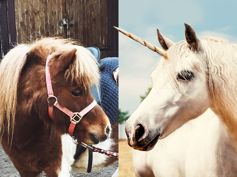 pony unicorn internal communication